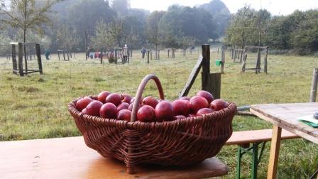 frisch geerntet - Obstwiese Radevormwald